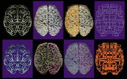 Neurology - Assessment